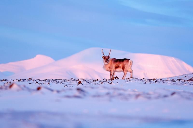 Zima na Svalbardzie.