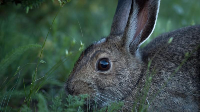Badania przeprowadzono na grupie siedmiu królików.