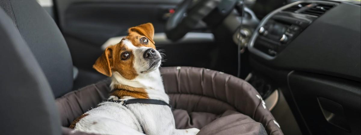 Podróż z psem przez granicę: sanepid zakazał przewożenia zwierząt? Sprawdzamy