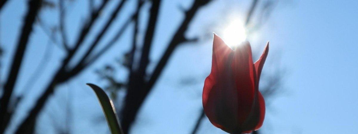 Wielkanoc w Norwegii ciepła i słoneczna. Nie obejdzie się jednak bez deszczu [PROGNOZA]