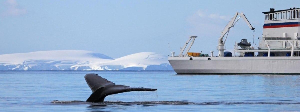 """Świat bije na alarm: w Norwegii rozpocznie się kolejna """"rzeź wielorybów"""""""
