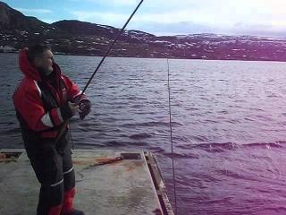 Zębacz - złowiony z pomostu w Norwegii