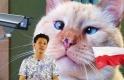Wigilia z reniferełm słodkim jak kotek, podczas rozmowy u bogatego Norwega. Tydzień #15