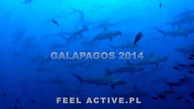 Nurkowanie Galapagos