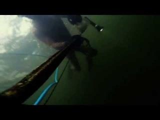 Spearfishing 2015  Oslo fjord