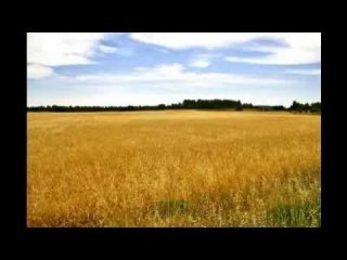 Fields of Gold Sting-The Police