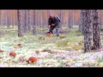 Grzybobranie w Norwegii