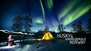 Husky & Aurora Borealis. Norway