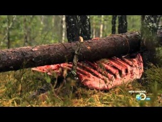 "Man vs Wild | Season 6 Episode 3 - ""Norway: Edge of Survival"""