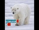 Piękny Svalbard
