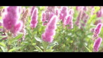ZAKRĘT - W drodze do szczęścia (OFFICIAL VIDEO)