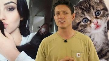 Kot zgubiony na lotnisku, czyli jak przewozić zwierzęta?