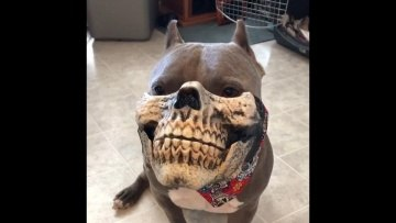 Dog with Mask