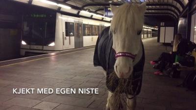 Koń w norweskim metrze (t-bane) Ikke ta hesten din med på t-banen