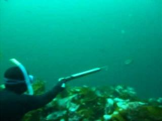 Spearfishing Norway(Kristiansund)