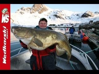 Rekordowe dorsze złowione  z motorówki na 500 g pilkery  -  Loppa pólnocna Norwegia
