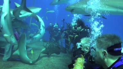 Nurkowania na Bahamach