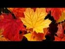 Hanna Banaszak - Jesienny Pan (Mr. Autumn)