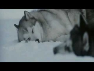 Nightwish - While your lips are still red.flv